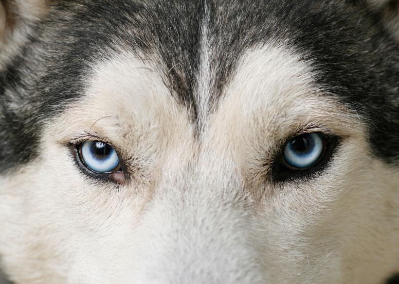 CT Cronica:  slEd dog emerges (1/6)