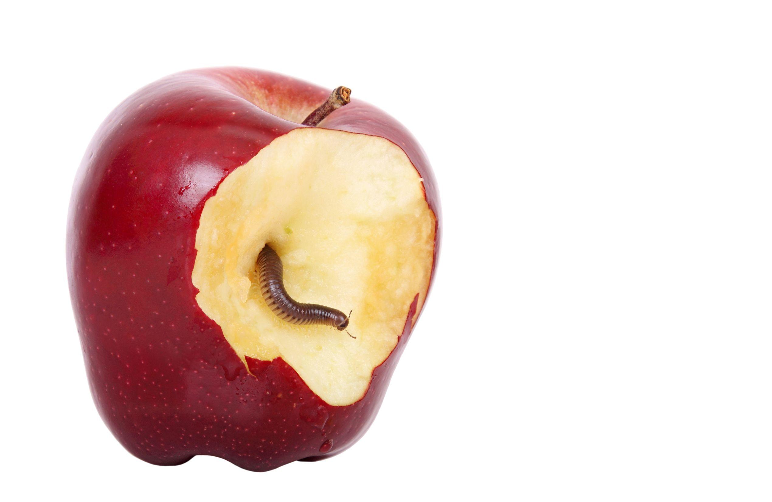 apple n worm