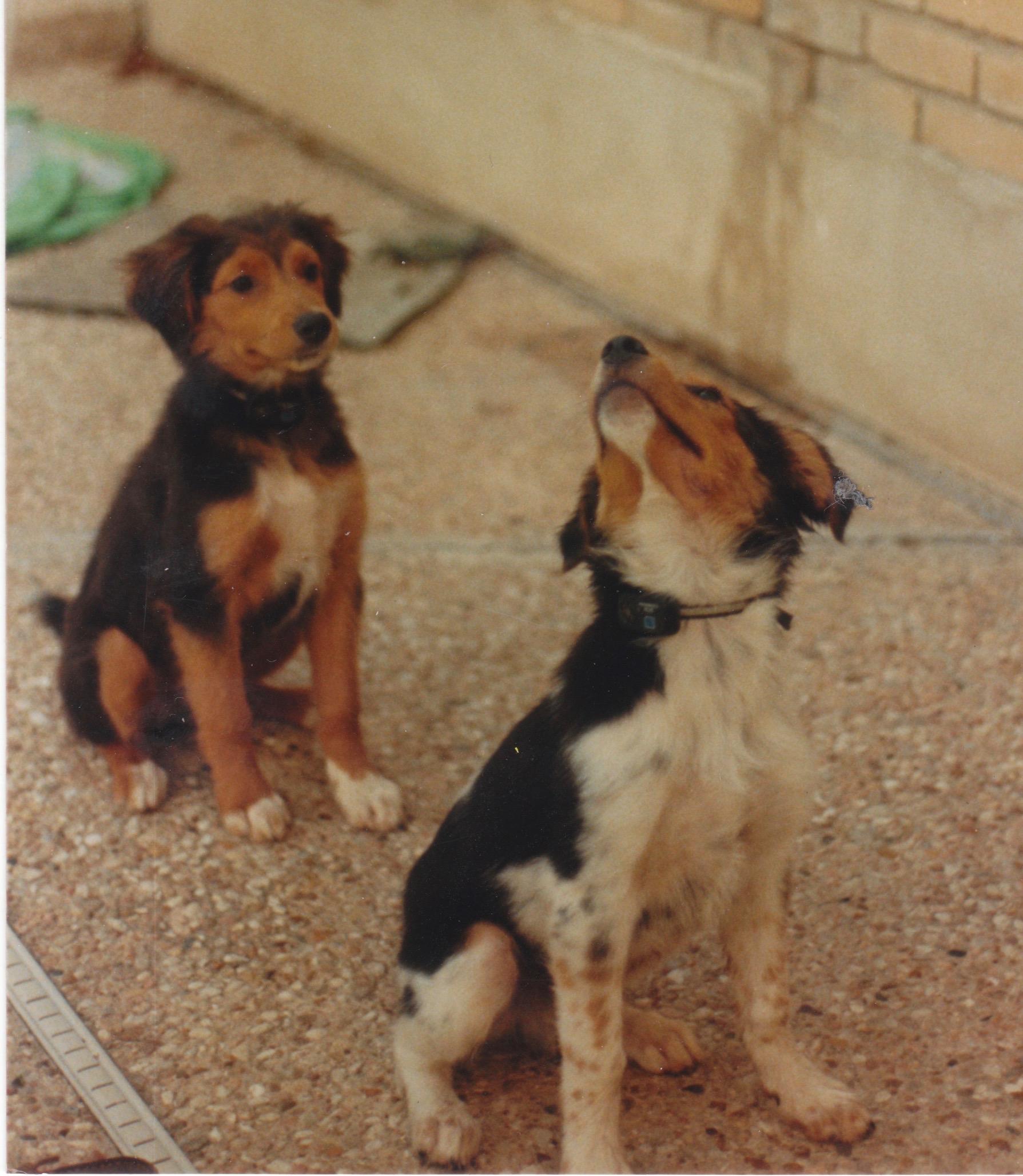 tara and teddy